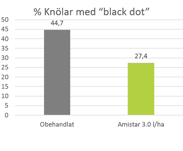 Procent knolar med black dot